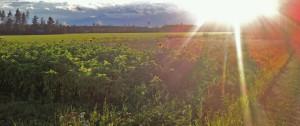 kukkapelto2
