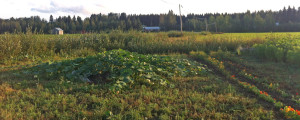 kukkapelto3